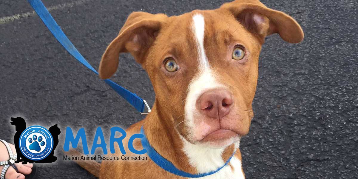 MARC: Marion Animal Resource Connection | EDUCATION